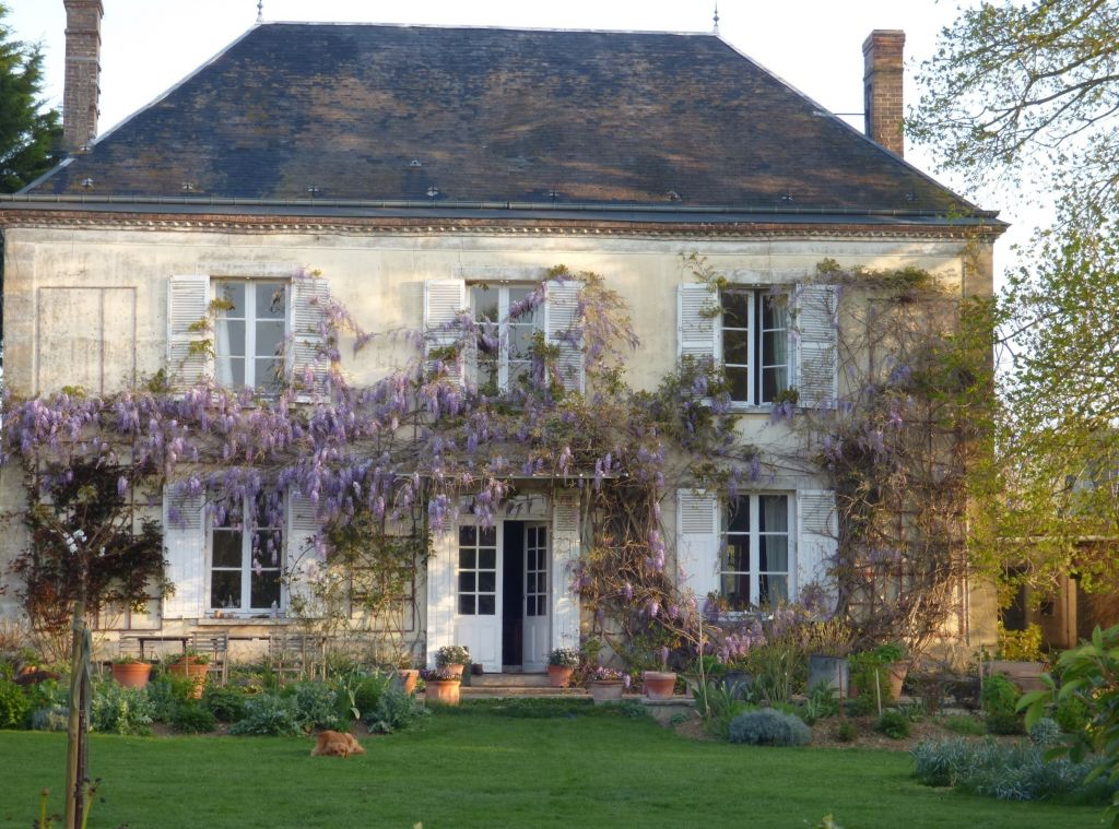 Wisteria blooming and fragrant my french country home for French countryside real estate