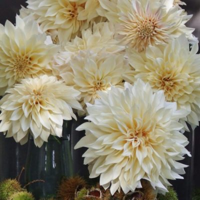 my french country flowers - dahlias and chestnuts