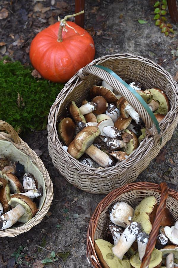 mushrooms in basket, photo by Franck Schmitt